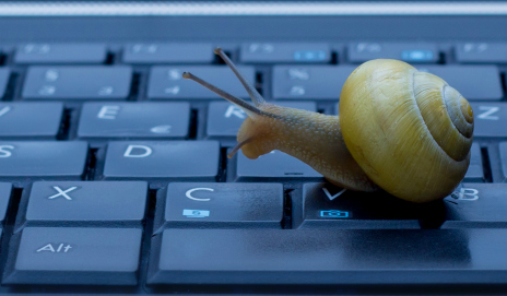 Insight- A Teacher has Come Forward on Having a Snail Grade Their Students' Assignments